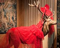 Visite du Musée de la chasse et de la nature avec une escort 3e arrdt de Paris