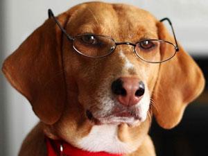Chien avec des lunettes joue les thérapeutes